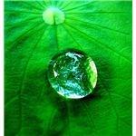 568px-Water drop on a leaf