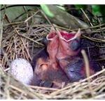 Egg and Nestlings