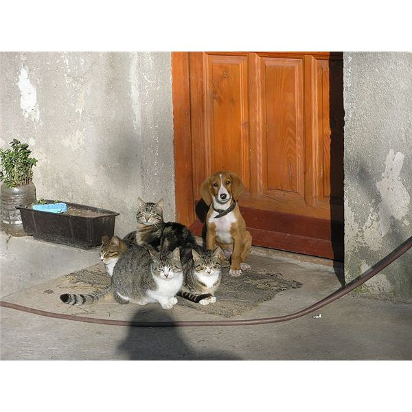 Cats and Dogs Orlovic Wikimedia Commons