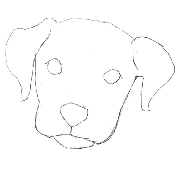 Line Drawing Dog Face : Learn how to draw a dog in photoshop