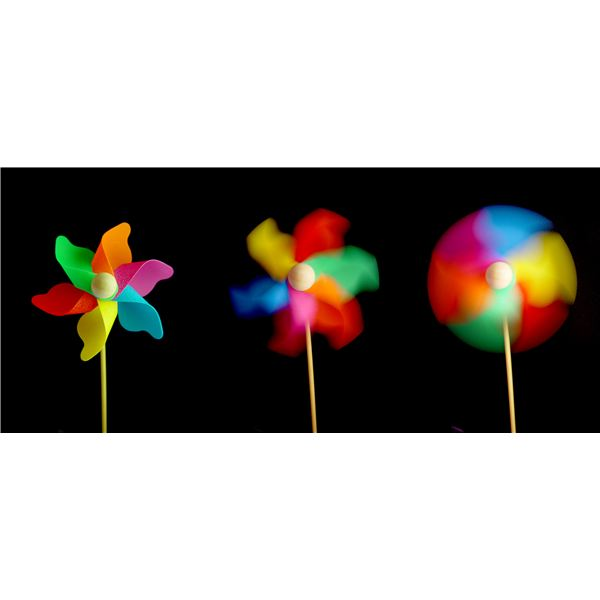 Windflower at Different Shutter Speeds