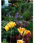 garden soil pH
