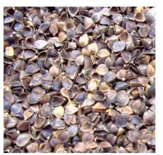 buckwheat hulls small