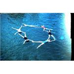 synchronzied swimming