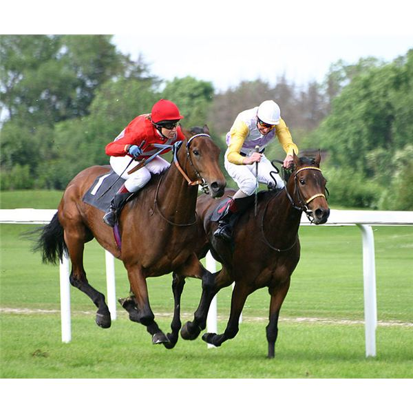 720px-Horse-racing-4