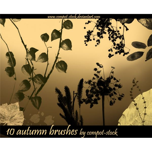 autumn brushes by compost stock