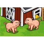 Two Adolescent Pigs