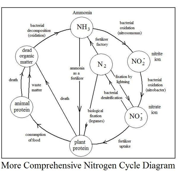 A Nitrogen Cycle Diagram