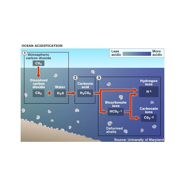 acid -acidification process