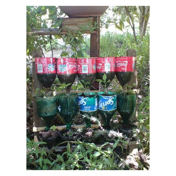 Repurposing Plastic Bottles in the Home Garden