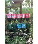 Repurposing Plastic Bottles in the Home Garden