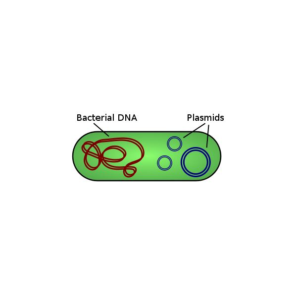 Cloning Steps for Genes: How Geneticists Use the Basic Steps in Gene Cloning in Recombinant DNA Technology