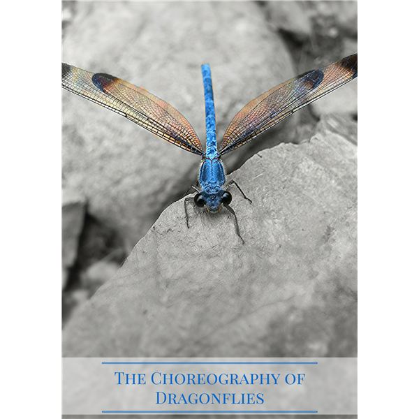 The Choreography of Dragonflies