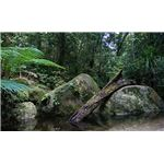 all about the tropical rainforest