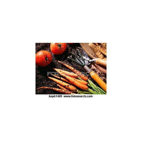 vegetable-gardening ~bxp61489