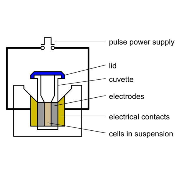 Electroporation Diagram