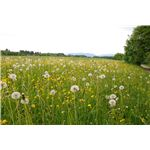 Meadow, Alfi007
