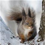 Squirrel Lesson & Activities for Preschool