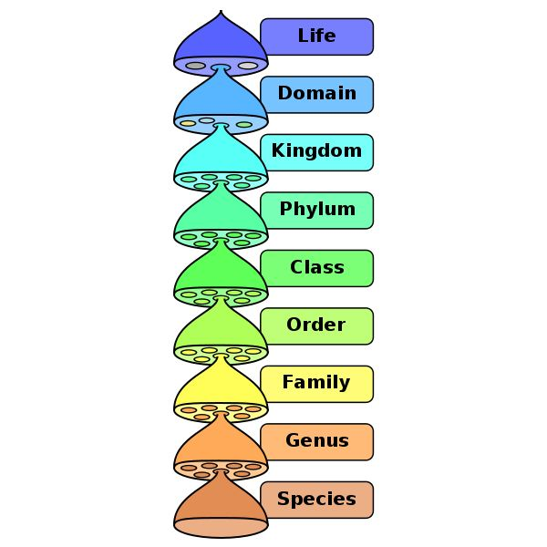 Biological Classification System