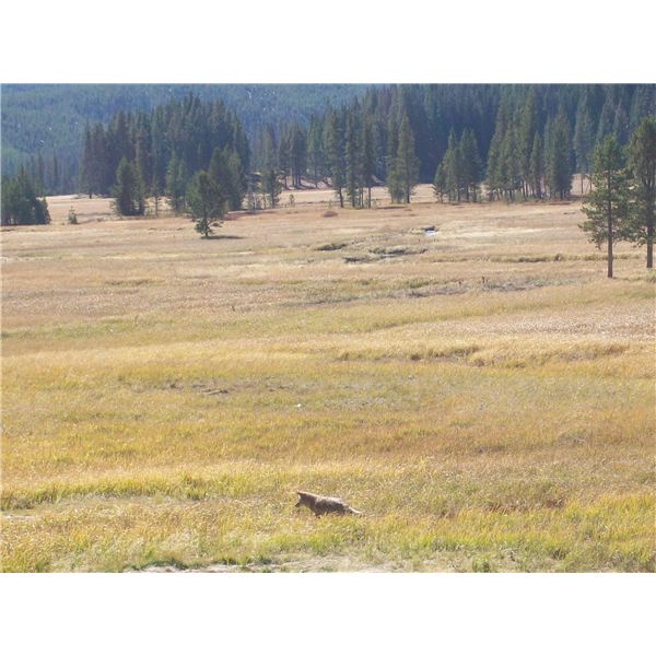 Yellowstone in October 039