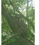 owl (using digital zoom)