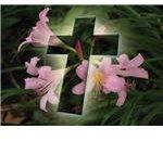 religious-easter-wallpaper-eastercrosswithflowers