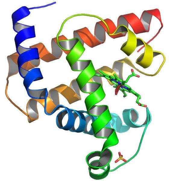 Myoglobin Protein by Aza Toth