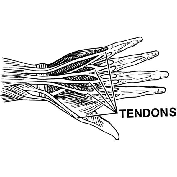 Treatment of Tendinitis:  What are Your Options?