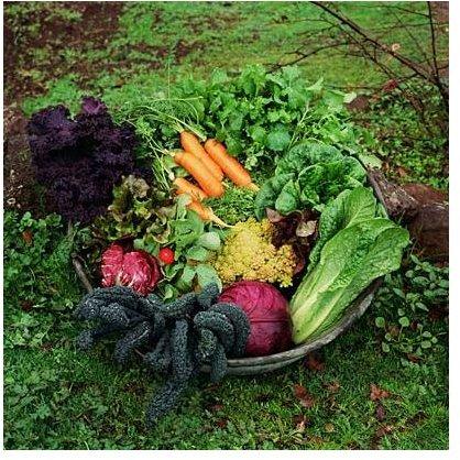 Juicy, organic veggies!