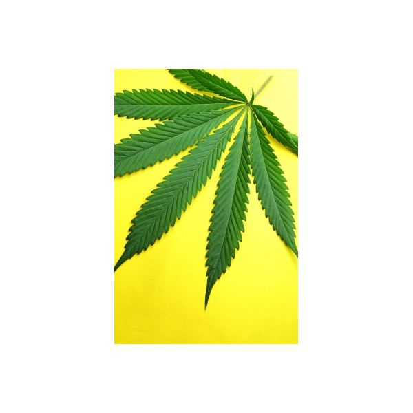 FreeDigitalPhotos, cannabis, Paul