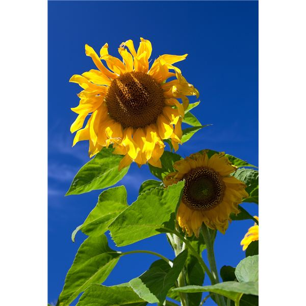 """Teaching """"The Sunflower: On the Possibilities and Limits of Forgiveness"""" High School Lesson"""