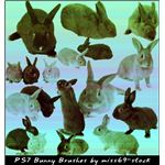 Bunny brushes by miss69 stock