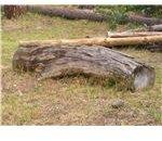 Split freshly harvested wood for quicker drying.