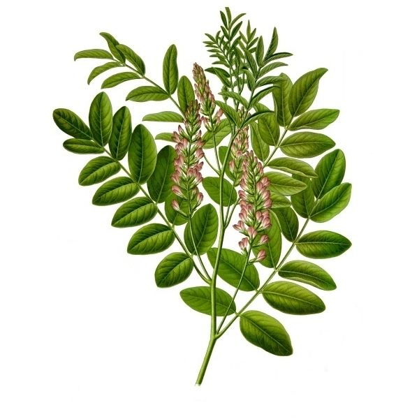 Herbs for HIV: Slowing the Progression of HIV Naturally
