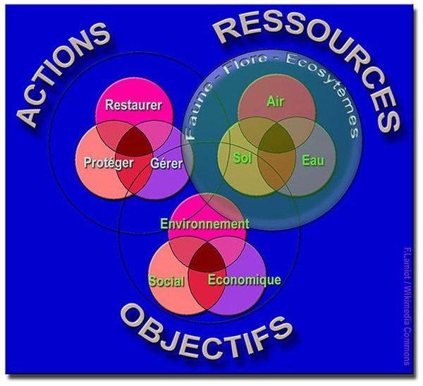 Understanding Environmental Impact Assessments (EIA)