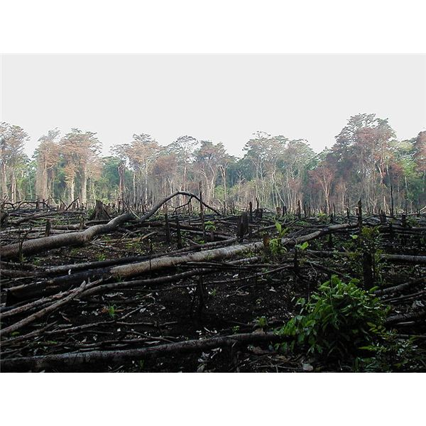 A disaster-scale ecological disturbance