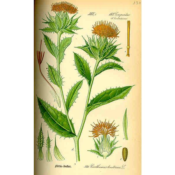 Learn the Facts About Safflower Oil Health Benefits