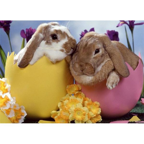 Bunnies And Eggs Wallpaper