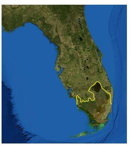 Everglades Ecoregion Image Source: www.wikimedia.org