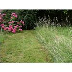 Landscaping of an English Garden lawn by Snowmanradio/Wikimedia Commons (GNU)