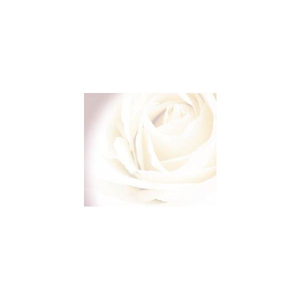 rose-backgrounds-faded-white-rose
