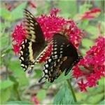 butterflies (using a slow shutter speed)