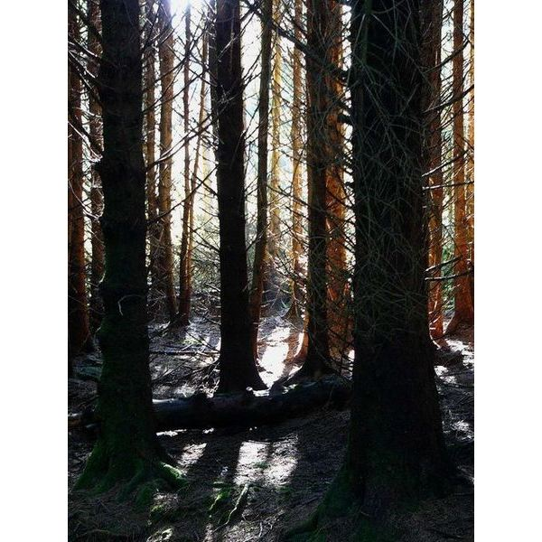 450px-In a forestry plantation - geograph.org.uk - 526669