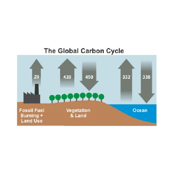 Global Carbon Cycle from International Panel (August 2010) on Climate Change (IPCC AR4)