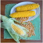 593px-Corn-raw-boiled-and-dry