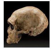 neanderthal skull LaFerrassie1 s JDDH sq