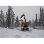 Finnish forests Old-growth forest destruction for Stora Enso by Greenpeace Finland