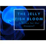 The Jelly Fish Bloom