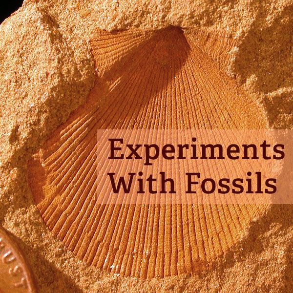 Kids of all ages will love these fossil experiments and activities.