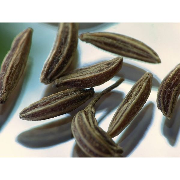 Health Benefits of Caraway Seed (image in the public domain)